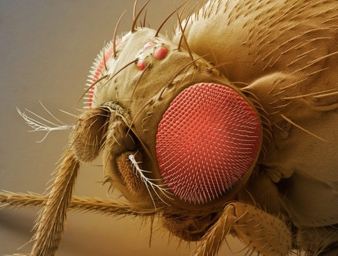 a fly compound eye super clear