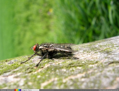 a fly sunbathes