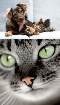 a meow agou hd picture 2 2p