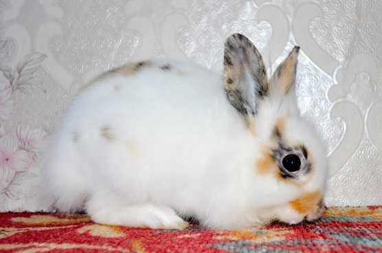 a small rabbit