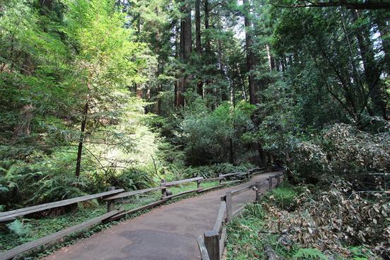 a trip to muir woods san francisco aug 2014