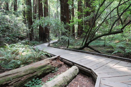 a trip to muir woods san francisco aug 2014