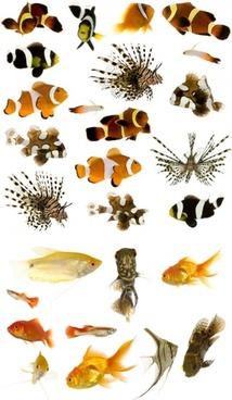 a variety of fish highdefinition picture 1