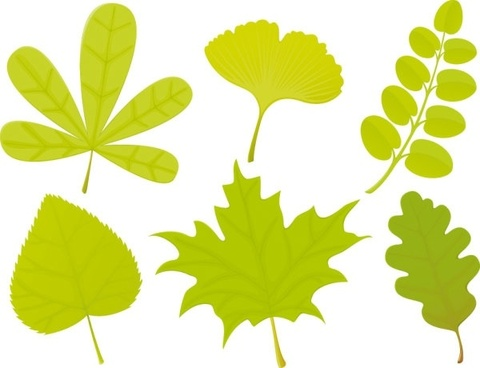a variety of leaf forms 04 vector