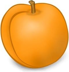 abricot entier