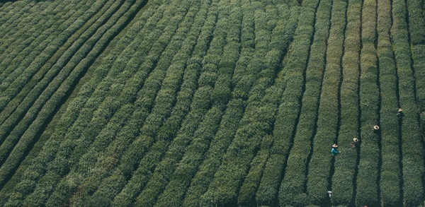 abstract abundance agriculture background crop