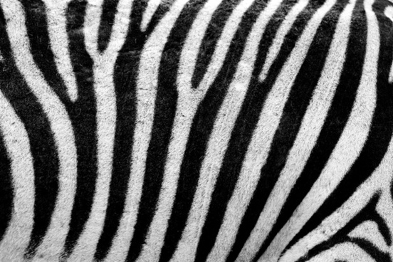 abstract africa animal