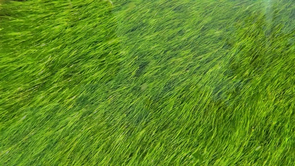 abstract agriculture background ecology farm field