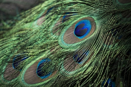 abstract animal background bird bright color detail