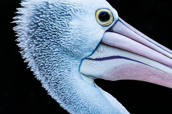 abstract animal beak bill bird closeup color colour