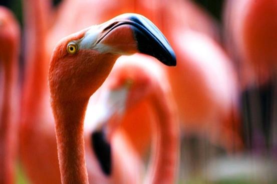abstract animal bird blur close closeup color