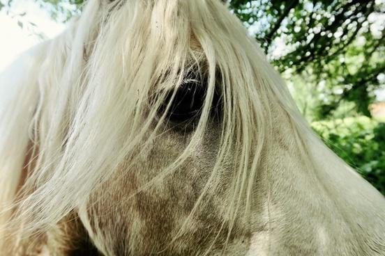 abstract animal child equine farm girl grass grey
