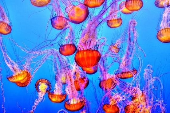 abstract aquarium art balloon beautiful birthday