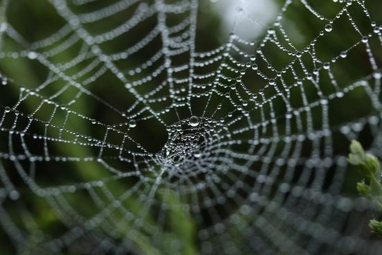 abstract arachnid cobweb connection delicate dew