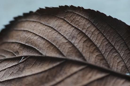 abstract autumn background bird close closeup color