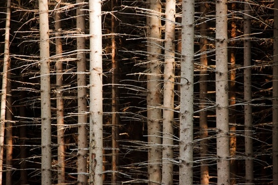 abstract background bark