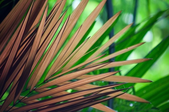 abstract background bright color detail exotic frond