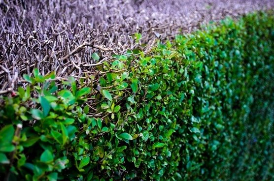 abstract background bush
