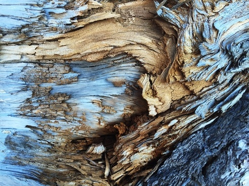 abstract background coast dead driftwood frozen ice