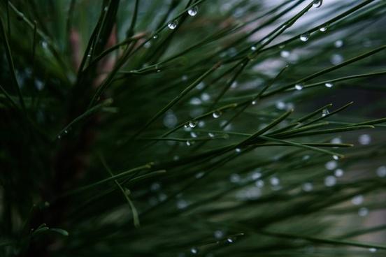 abstract blur dew dof drop garden grass leaf