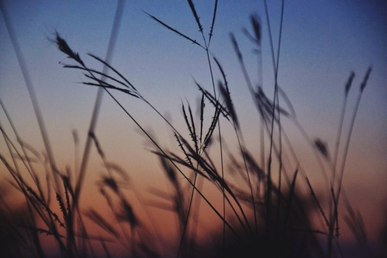 abstract evening field grass lake landscape morning