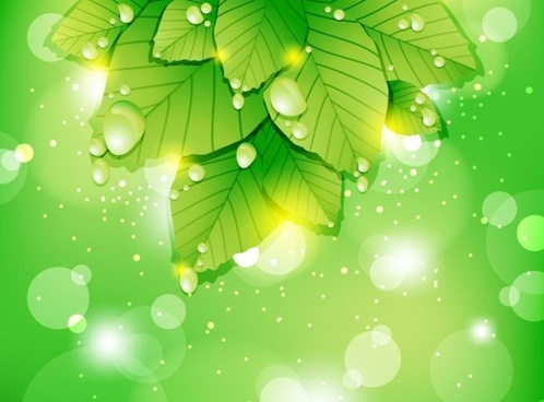 fresh nature background leaf icon green bokeh decor