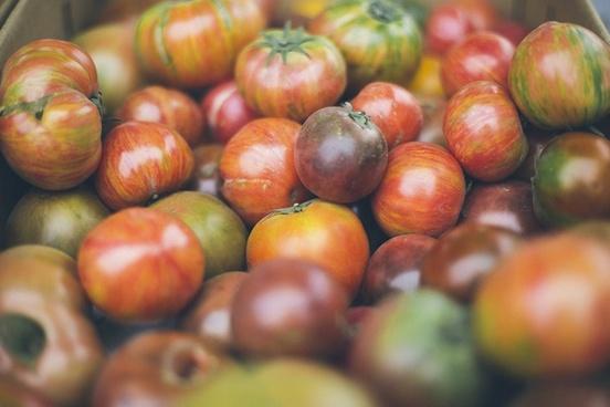 abundance agriculture autumn cherry fall food fruit