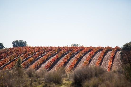 abundance agriculture autumn color daytime fall