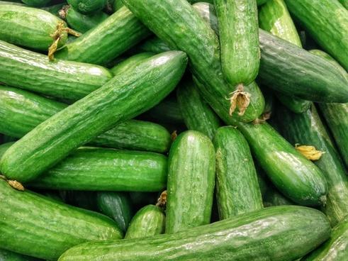 abundance agriculture cucumber food fruit gourd