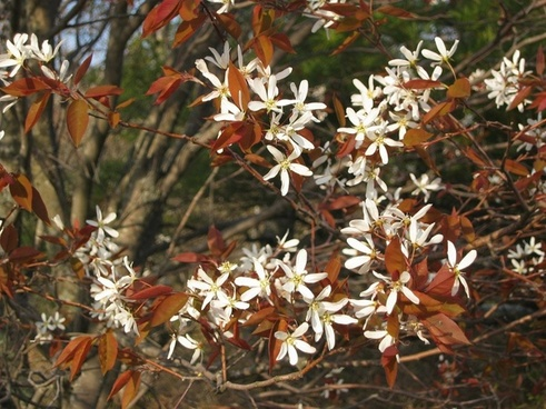 acadia national park flowers trees
