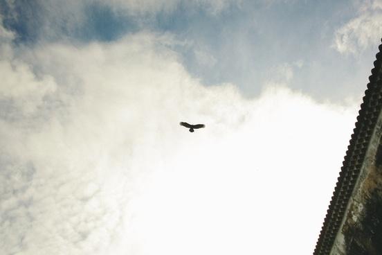action aeroplane air aircraft airplane animal