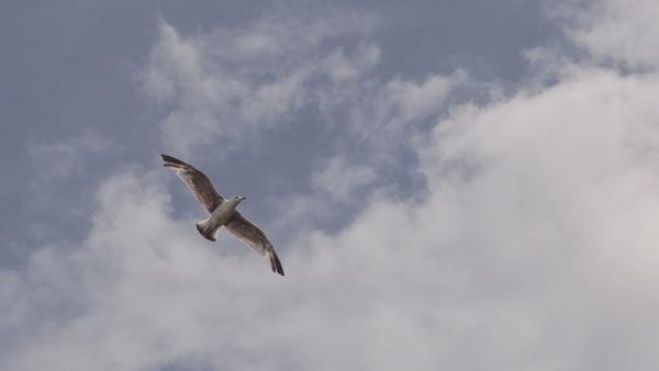 action aeroplane air aircraft airplane animal bird
