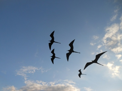 action air aircraft airplane bird daytime flight