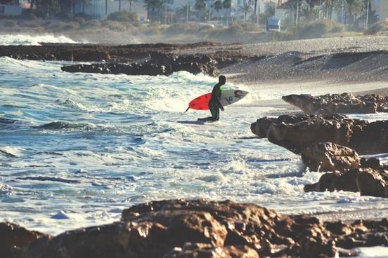 action animal antarctica beach bird coast cold fish