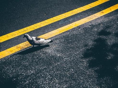 action asphalt background competition fast highway