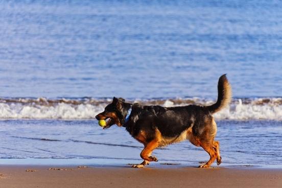 active animal beach