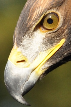 adler eye bill