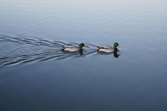 adult animal bird daytime lake leisure nobody oar