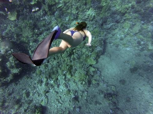 adult daytime diving enjoyment fish fun girl