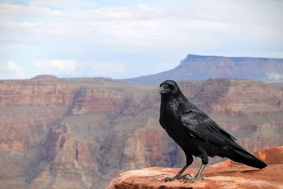 adventure animal bird daytime horizontal landscape