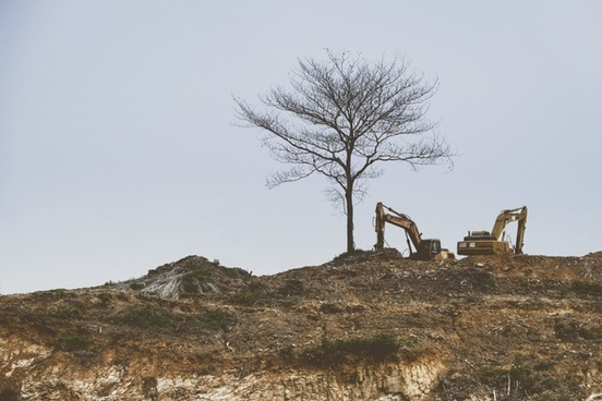 adventure branch desert desolate dry environment