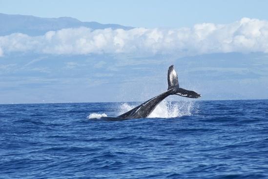 adventure cetacean dolphin fin freedom horizontal