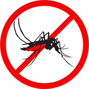 aedes aegypti vector