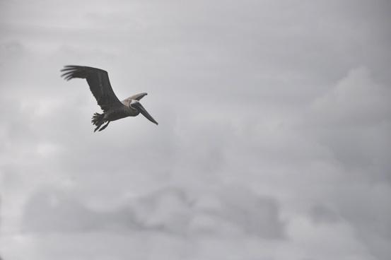 aeroplane air aircraft airplane animal beach bird