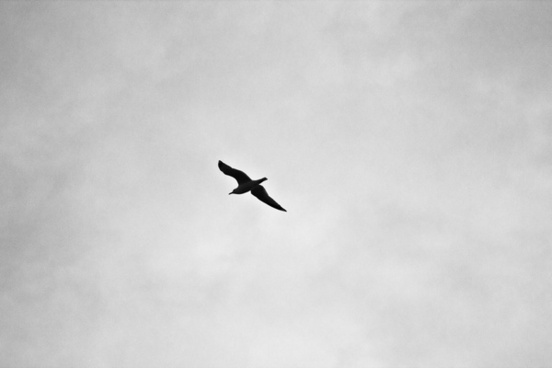 aeroplane air aircraft airplane animal bird black and