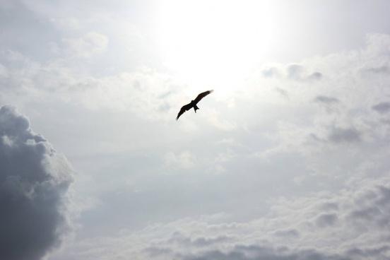 aeroplane air aircraft airplane animal bird cloud