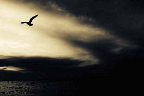 aeroplane airplane beach cloud dark dusk evening