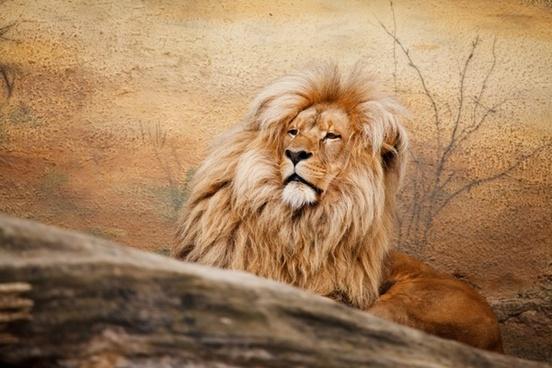 africa african animal