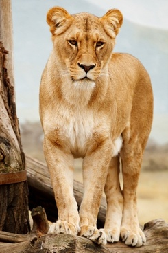 africa african animal