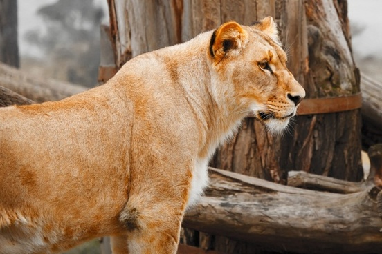 africa animal big